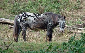 Lustig gemustertes Pferd